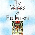 Voices Of Harlem